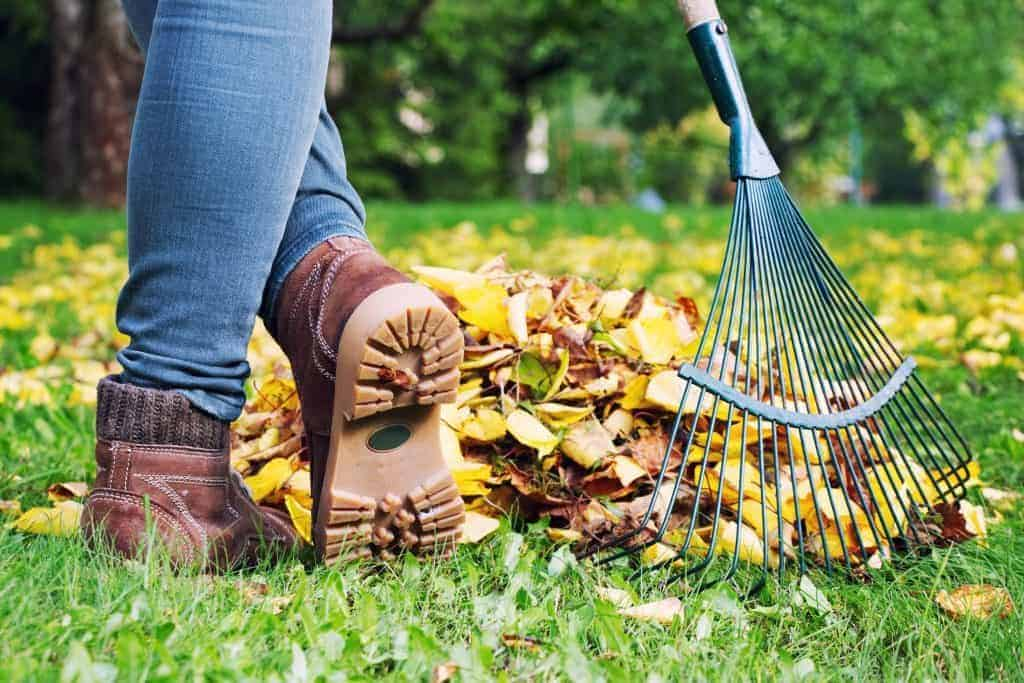 leaf and debris removal montgomery